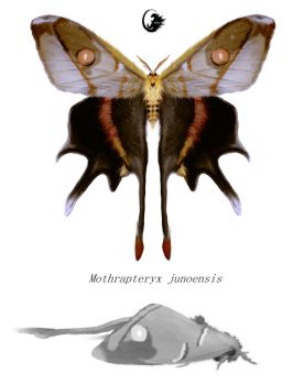 Mothra by Mirroraptor