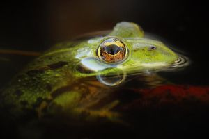 Illuminated frog... by Sara-Anjos