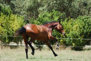 89 Oddcanter buck flyingchange by Chunga-Stock