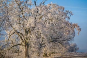 Frozen IV by Life-For-Sale