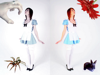 Alice in Whichland? by who-is-druscilla