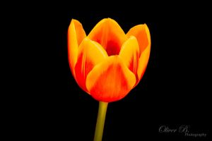 Fire Flower by OliverBPhotography