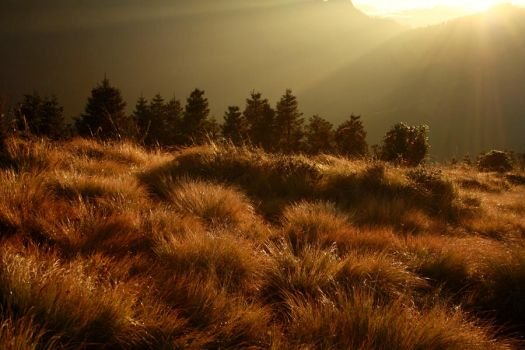 Field Of Gold. by PinkPenguinCookie