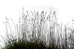 Grass 03 png by gd08