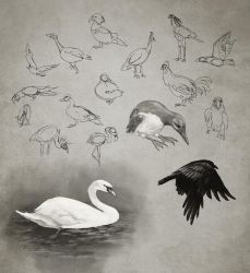 Daily Practice 01 29 2014 Birds by Eclectixx