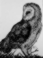 barn owl by GabrielleC-Drawings