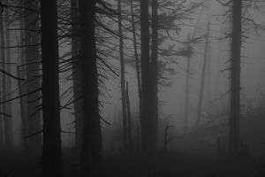 Spooky forest 2 by Miwicz