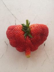 Strawberry :-D by PrimeBee1360