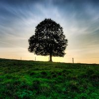 symbol of life by maticgolob