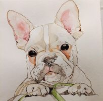 French Bulldog by mybuttercupart