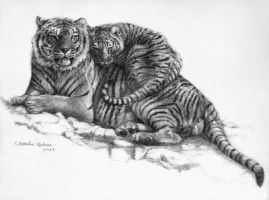Tiger and Cub by sschukina