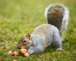 Squirrel 118: This BIG one, please! by EasternGraySquirrel