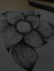 Flower drawing I Made With Charcoal Pencil by fluffycatjeff