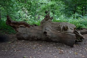DSC_0121 Sherwood Forest by wintersmagicstock