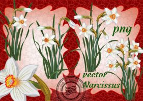 vector Narcissus by roula33