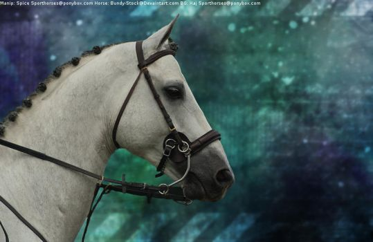 Buckskin 2(Horse Picture) by MollyMay335