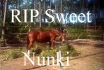 Only1 Abaco Spanish Colonial Horse Left -RIP Nunki by Lovely-DreamCatcher