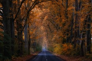 without you by ildiko-neer