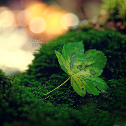 Love in the Autumn forest. by OliviaMichalski