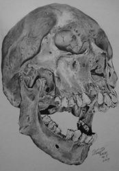 Skull,Dino Tomic copetition by robiartimre