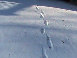 Footprints in the Snow by Gingitsune-Lady-Fox