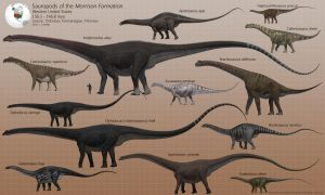 Sauropods of the Morrison Formation by PaleoGuy