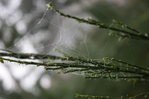 Spiders do in Morning Dew 4 by BlueDragonRose
