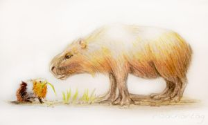 The Capybara and the Guineapig by Risachantag