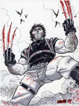 Ultimate Wolverine by dadicus