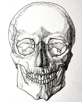 The Human Skull by artxnoa