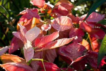 Bright Leaves and Sunshine by richardxthripp