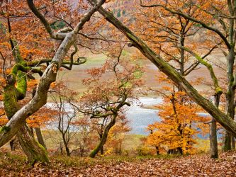 Red oaks above the Eder river #III, Lindenberg by zeitspuren