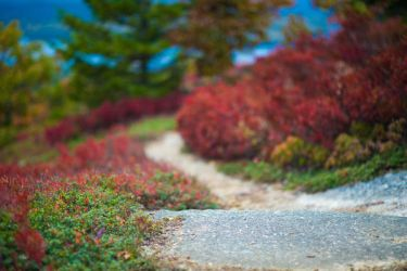 UNRESTRICTED Wonderland Path Stock 2 by little-spacey