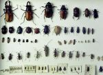 beetle sheet by chop-stock