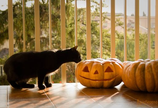 This is Halloween by AlexisPhotoart