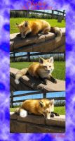 Chance - The Little Red Fox by Zhon