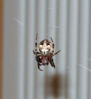 742 - spider by WolfC-Stock
