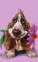 basset with sunflower by nosoart