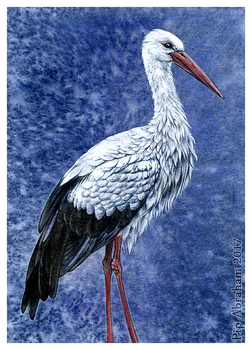 Commission: White Stork by oxpecker