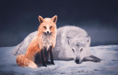 Fox and wolf by dann94