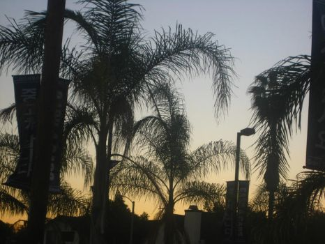 Palm Tree Shadows by Passcety