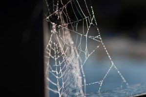 Spiderweb by HateCrewGirl