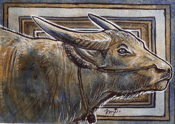aceo water buffalo by kailavmp
