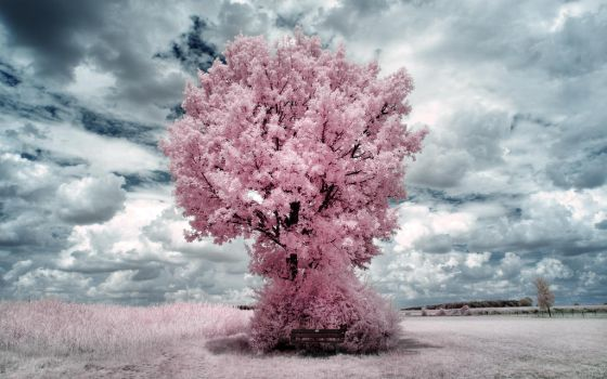 Pink Tree II by myINQI