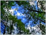 Staring up from a Bed of Pine by wonenownlee
