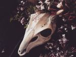 Deer mask with flowers 2 by Bueshang