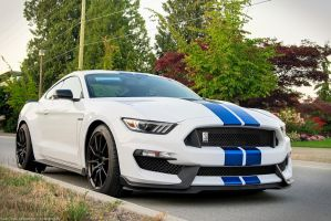 Blue on White Shelby GT350 by SeanTheCarSpotter