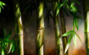 Bamboo by welshdragon