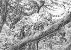 Leopard on the tree by CalciteMink1610