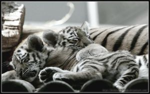 Nap by AF--Photography